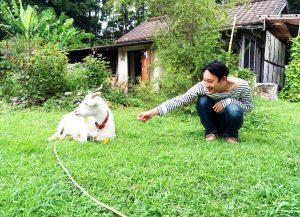ヤギと小濱
